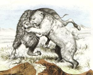 BISON FACE A OURS