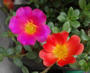 mon jardin 012