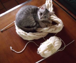 tricot-chat-copie-1.jpg