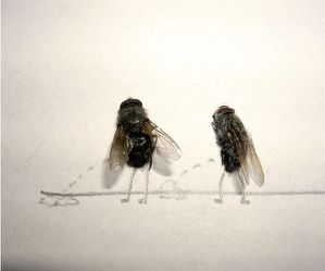 dead flies art 02