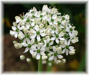 fleurs 3132 1