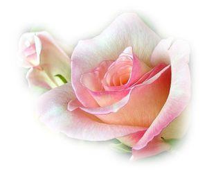 fleur-aq4