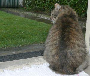 Activites-de-chats-pour-un-jour-de-pluie-02.JPG