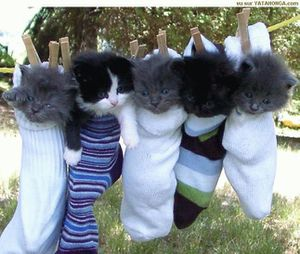 chat chaussettes