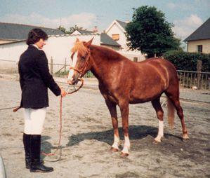 Présentation d'un poney en main Poney Français de selle PFS. Copyright Techniques d'élevage