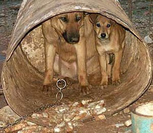 Chained-Mother-Pup.jpg