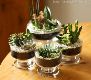 DIY_succulents_08.jpg