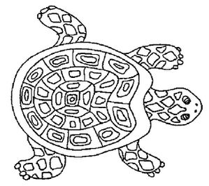 tortue14