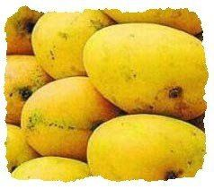 mangue-indienne-copie-1.jpg