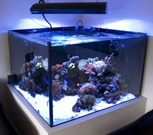 aquarium eau de mer 400 litres. Black Bedroom Furniture Sets. Home Design Ideas