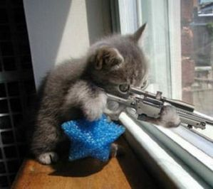 chat fusil