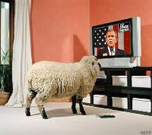 bush_sheep.jpg