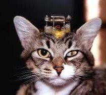 vivisection-chat-copie-1.jpg