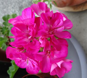 mon jardin 016