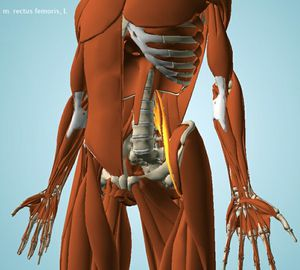 comment nettoyer psoas