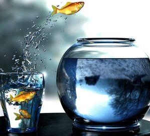 poissons rouges verre d eau