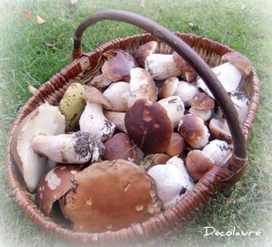 champignons armoire 004 picnik