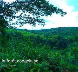 forêt congolaise