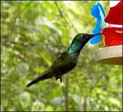 aves iguazu 8
