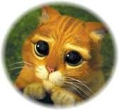 le-chat-potte.jpg