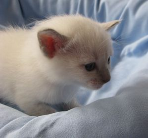 chatons-octobre2012-3362.JPG