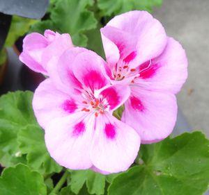 mon jardin 015