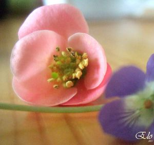 11-mars-30-Fleurs-10