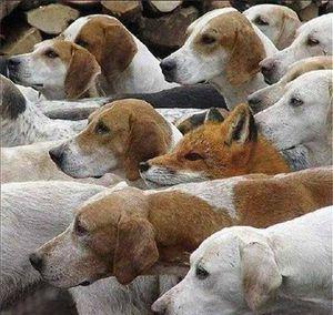 Meute chiens