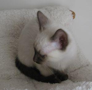 chatons-octobre2012-3424.JPG