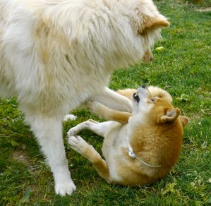 jeux-canins-codes-canins.jpg