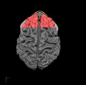 prefrontal-cortex.PNG