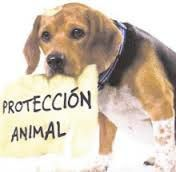 proteccion_animal31.jpg