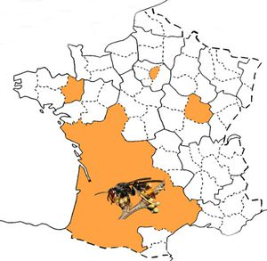 fig1_Carte_France_frelon_asiatique-10-13-09-10-04.jpg