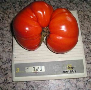 tomate jcl