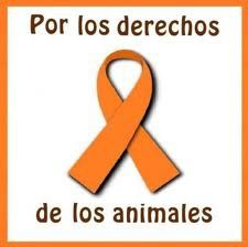 proteccion_animal26.jpg