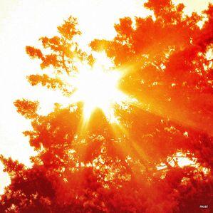 sous-le-soleil-d-automne-2.jpg