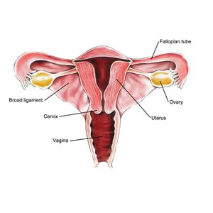 cancer-of-the-uterus1.jpg