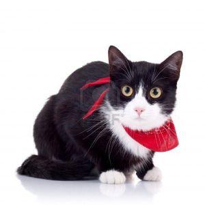 8043259-cute-chat-noir-et-blanc-avec-une-echarpe-rouge-sur-
