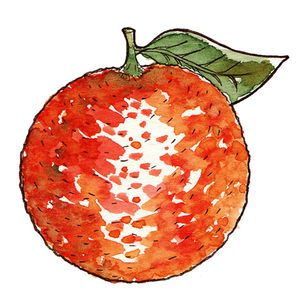 illustration-orange-a-l-aquarelle--copie-1.jpg