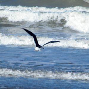 oiseaux 051