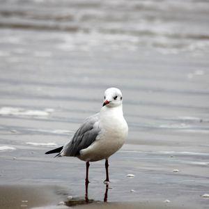 oiseaux-grande-plage-012.JPG