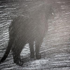 chats-steinlen-010.JPG