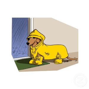 dachshund_in_raincoat_red_photosculpture-p15320034061685506.jpg