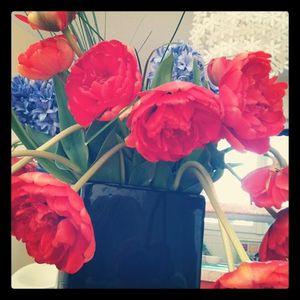 Tulipe.jpg