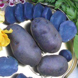 pomme-terre-bleuartois-bureau