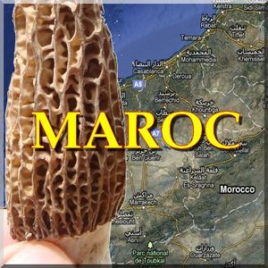 logo maroc morilles paul keirn natures