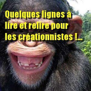 Pour-les-arriere-gardes-de-la-pensee---les-creationniste.jpg