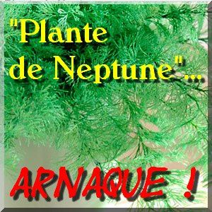 plante de neptune anti moustique une arnaque du fond des mers natures. Black Bedroom Furniture Sets. Home Design Ideas