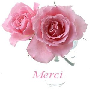 Merci-rose-4.jpg