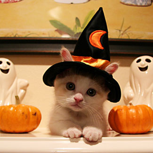 happy-halloween-chat-chapeau-sorciere-img